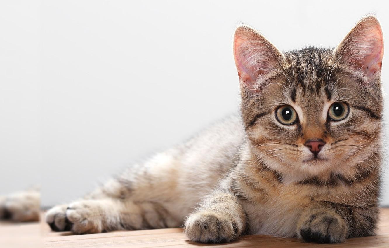 Photo wallpaper cat, look, strips