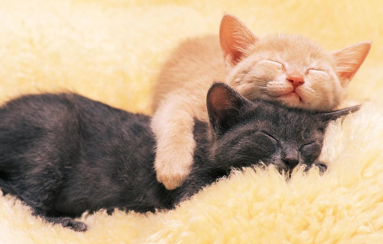 Photo wallpaper black, red, kittens, sleep