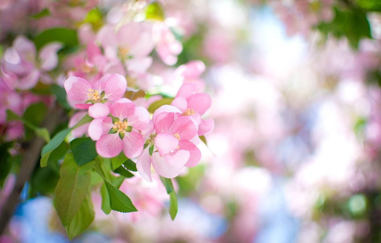 Photo wallpaper flowers, branch, petals, blur, pink