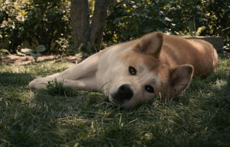 Photo wallpaper sadness, dog, red, waiting, dog, hah