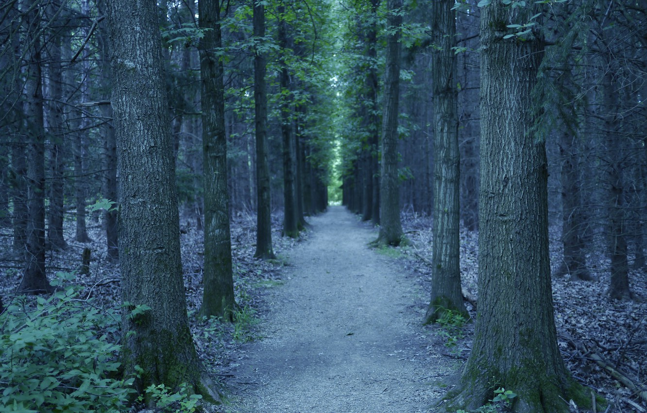 Photo wallpaper forest, trees, nature