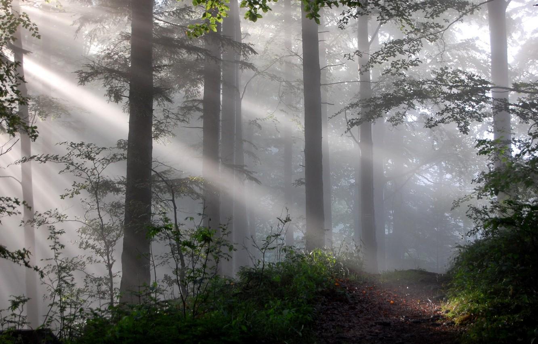 Photo wallpaper forest, light, nature, fog