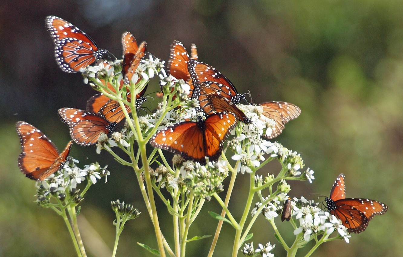 Photo wallpaper butterfly, flowers, branches, stems, buds, flowers, branches, butterflies, buds, stalks