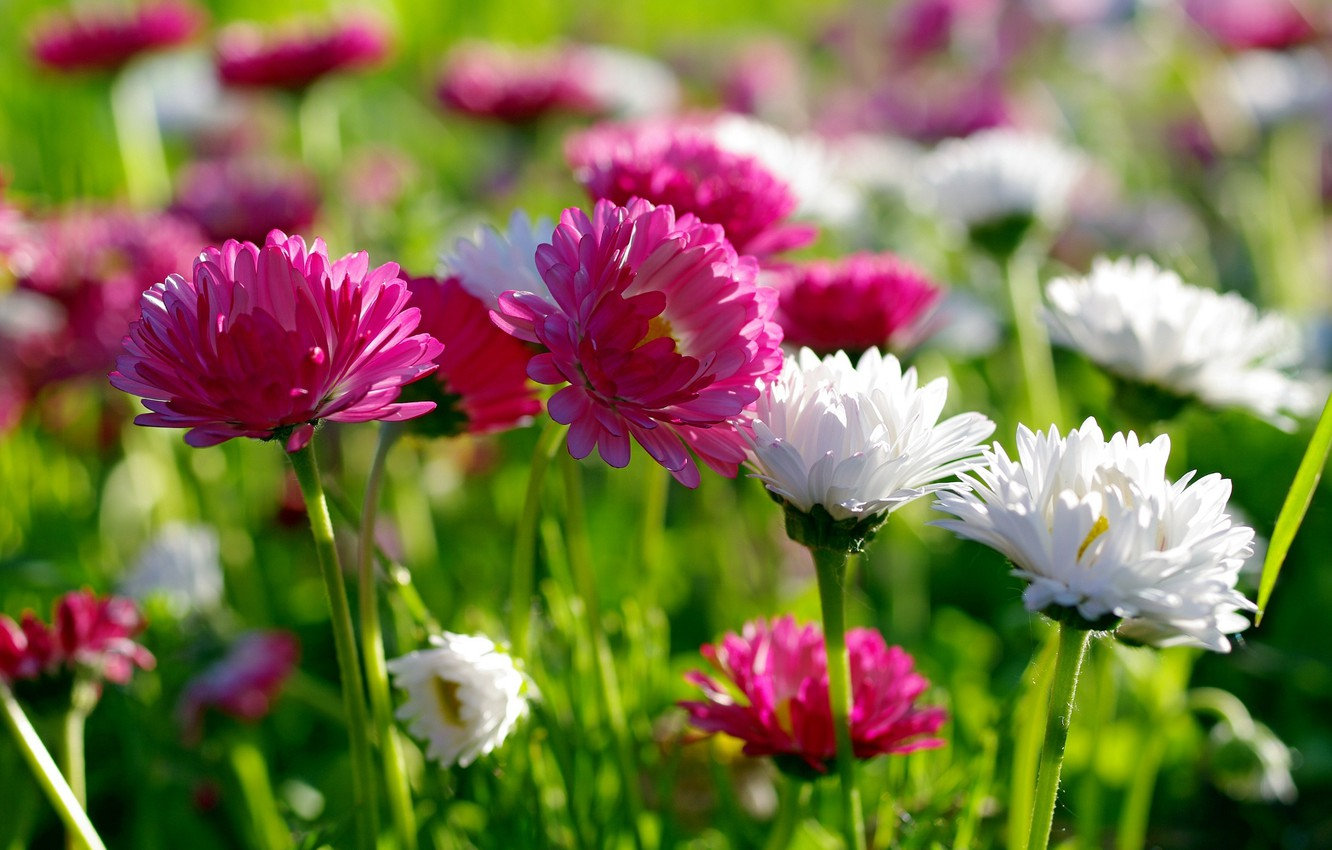 Photo wallpaper summer, flowers, nature, beauty, spring, meadow