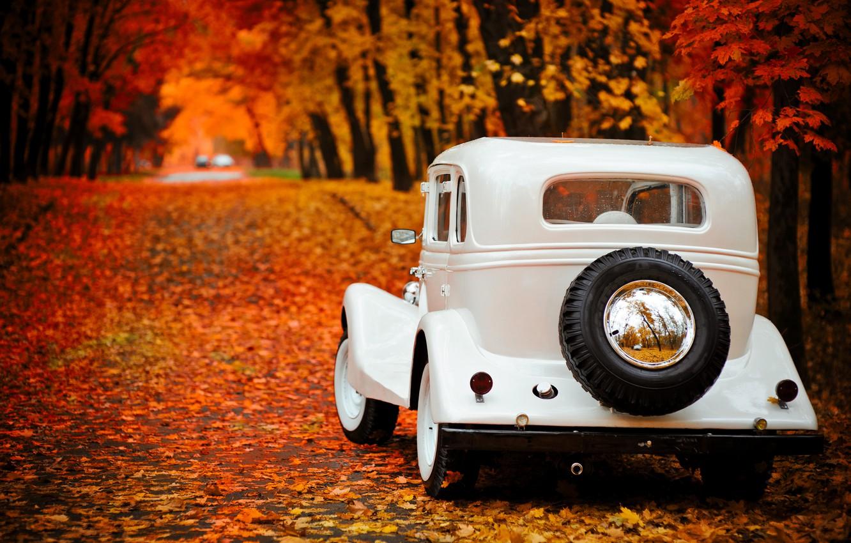 Photo wallpaper autumn, Park, background, Wallpaper, Gas, emka