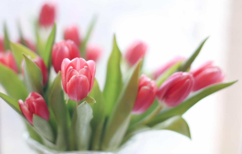 Photo wallpaper flowers, bouquet, tulips