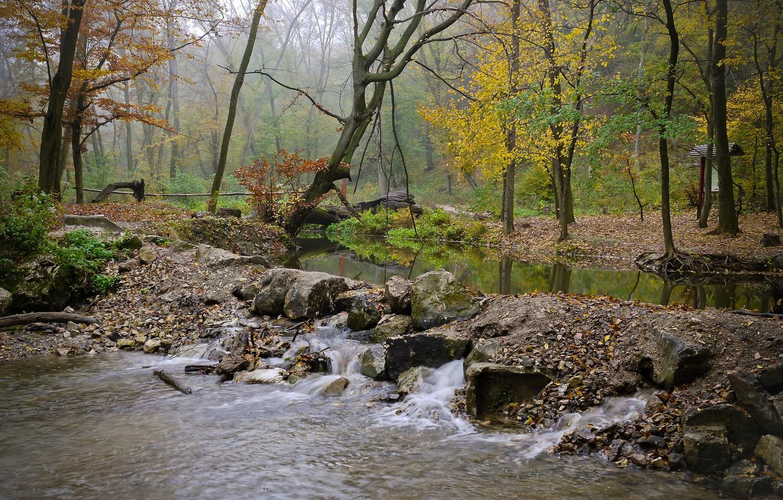 Photo wallpaper autumn, forest, fog, river, stones, stream