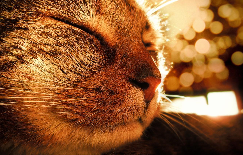 Photo wallpaper cat, the sun, mood