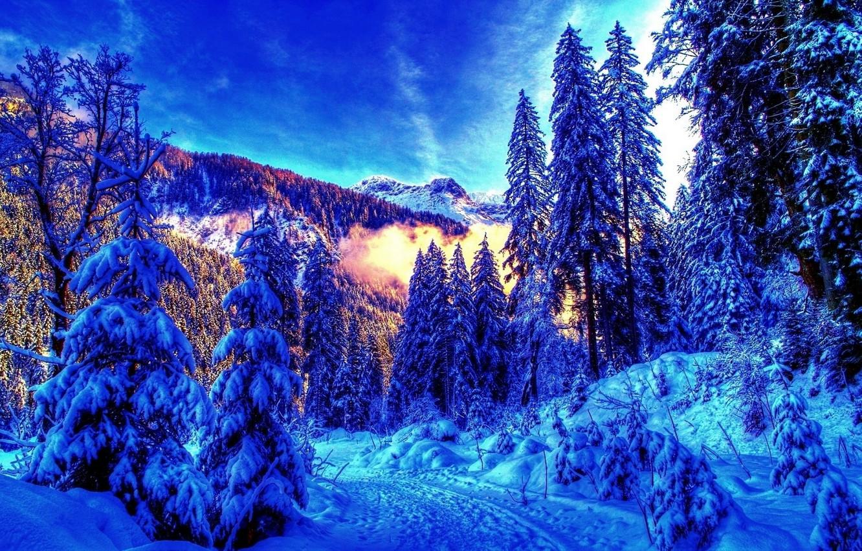 Photo wallpaper winter, forest, landscape, mountains