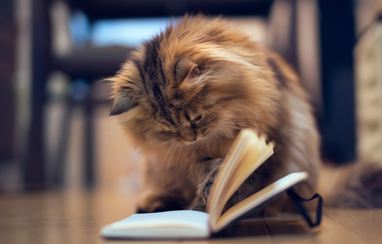 Photo wallpaper cat, kitty, the game, floor, Notepad, book, page, Daisy, Ben Torode