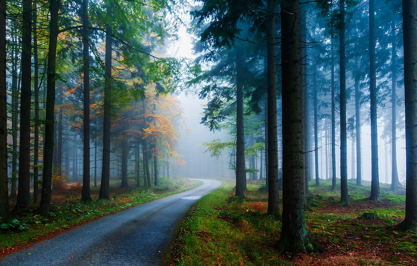 Photo wallpaper road, autumn, trees, nature, fog, trunks, Forest, ate, needles