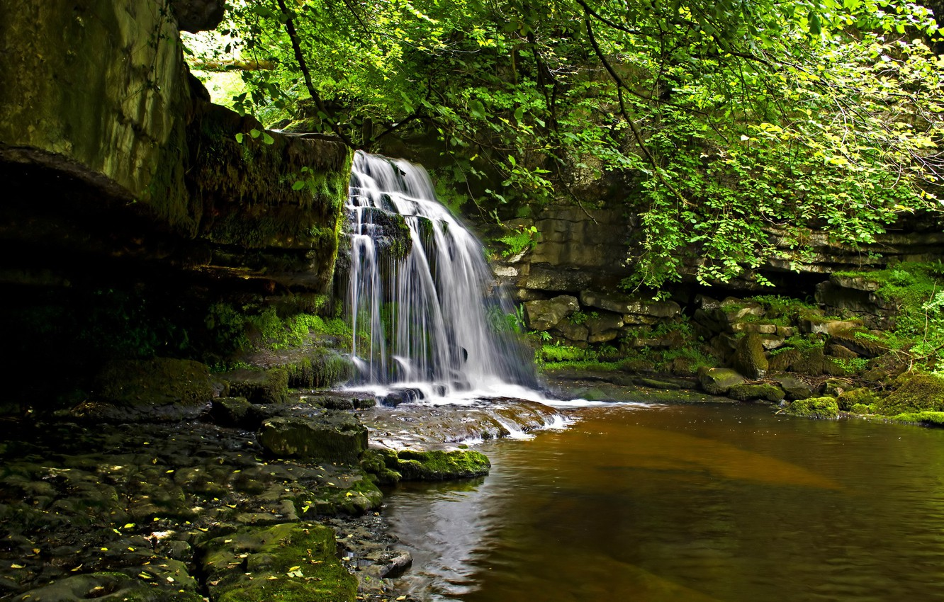Photo wallpaper forest, nature, river, waterfall