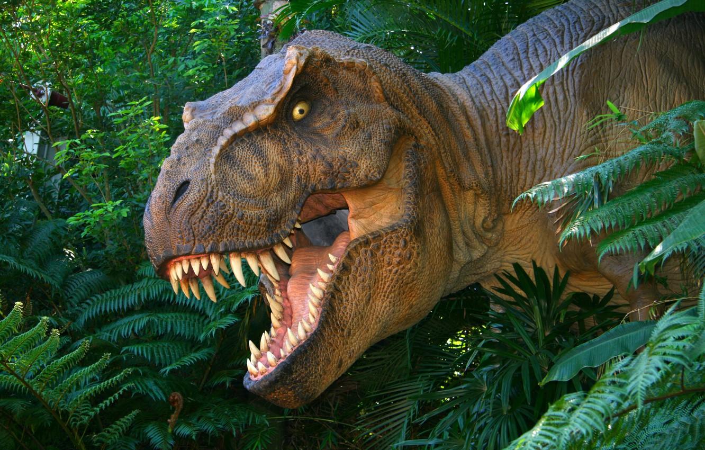 Wallpaper Dinosaur T Rex Rex Jurassic Park Prehistoric Images