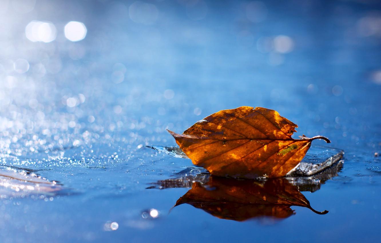 Wallpaper Water Yellow Sheet Droplets Glare Leaf