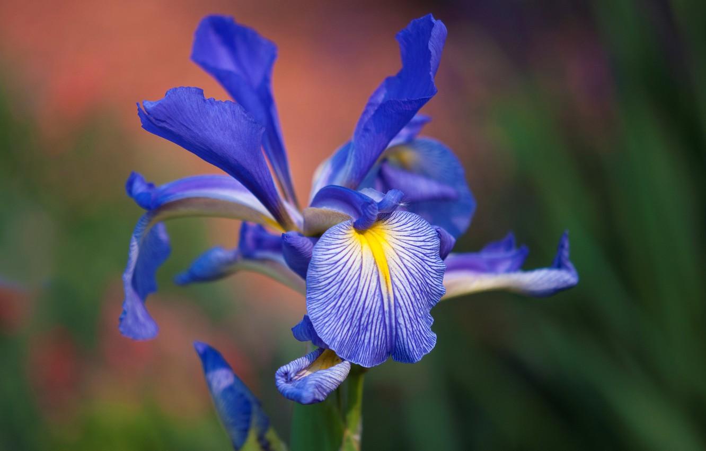 Photo wallpaper flower, nature, paint, petals, exotic