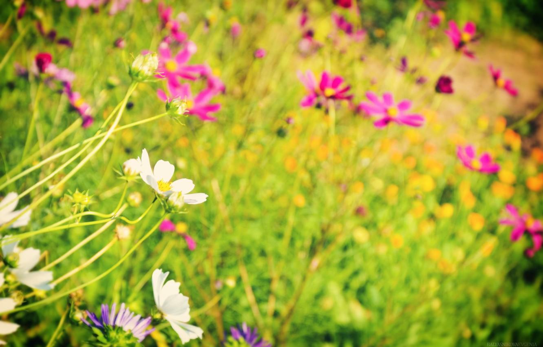 Photo wallpaper greens, summer, flowers, cute, beautiful, summer, flowers