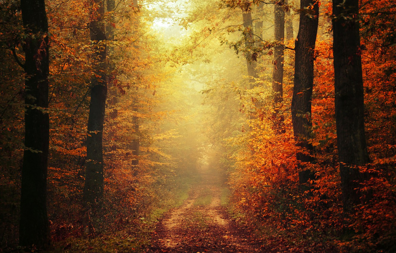 Photo wallpaper autumn, leaves, fog, way, pathway, trail, autumn colors, path, mist, fall, foliage, woodland, fall colors