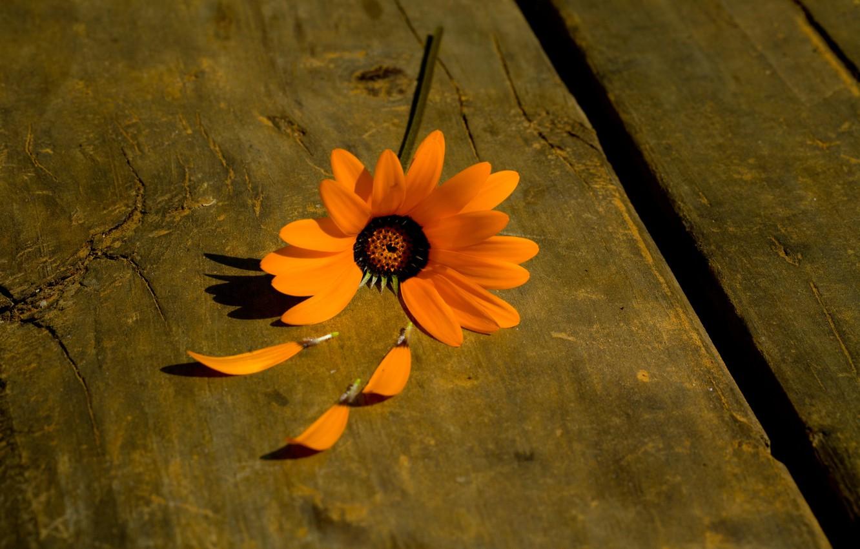 Photo wallpaper flower, flowers, orange, background, tree, plant, petals, widescreen, full screen, HD wallpapers, flower, widescreen