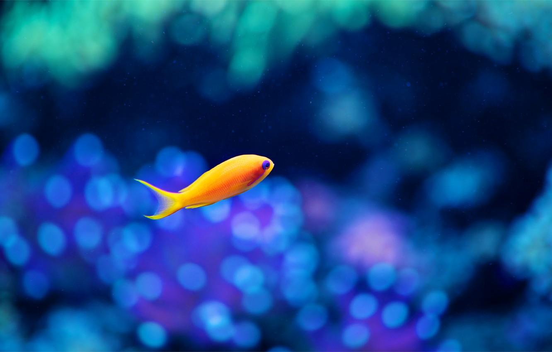 Photo wallpaper glare, background, aquarium, fish, blur, Fish, yellow