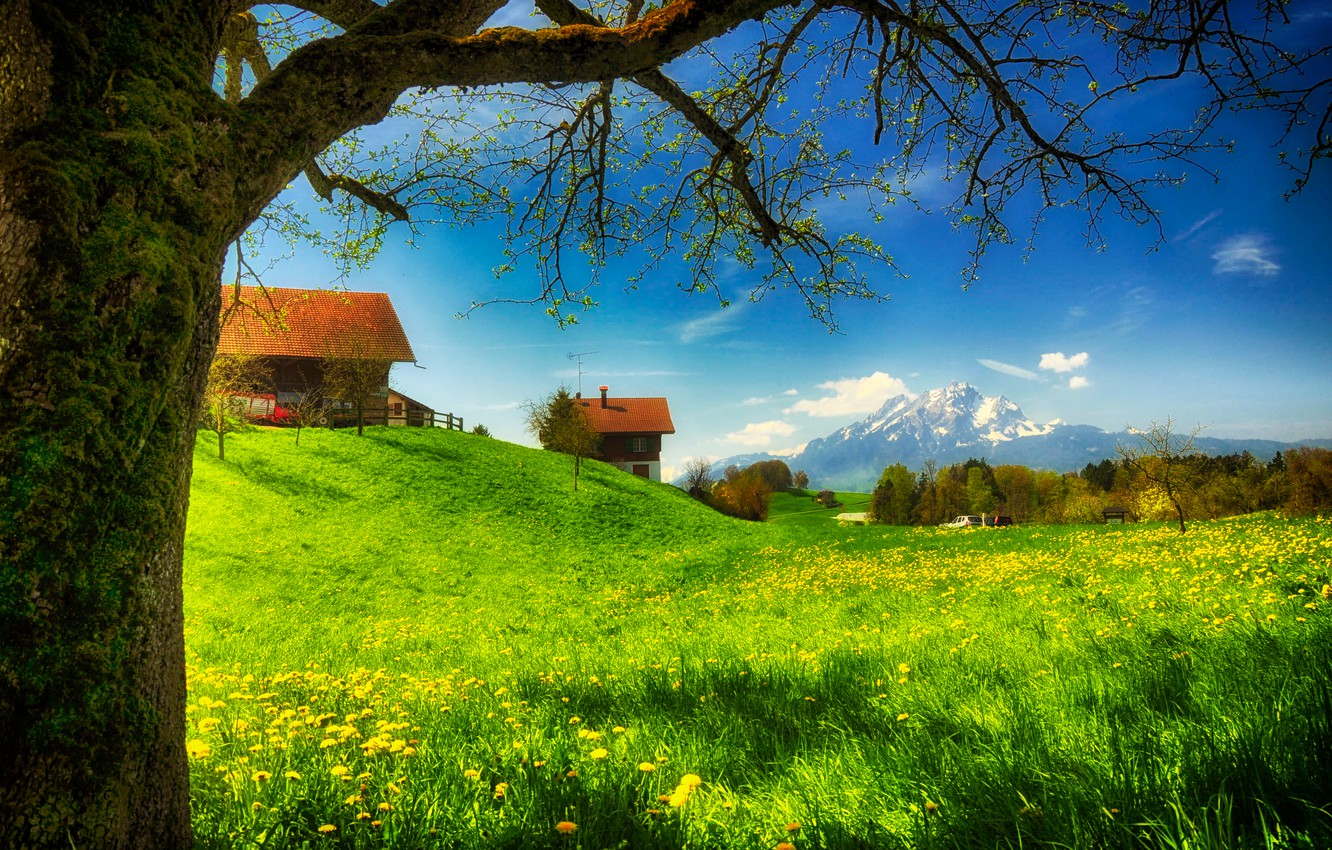 Photo wallpaper greens, grass, flowers, mountains, glade, moss, home, spring, houses, Sunny
