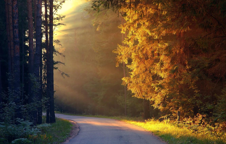 Photo wallpaper light, forest, path