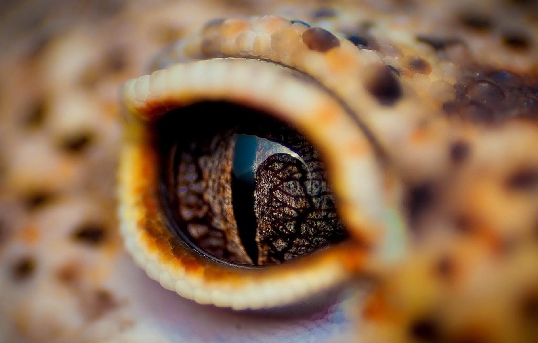 Photo wallpaper eyes, crocodile, eyelid