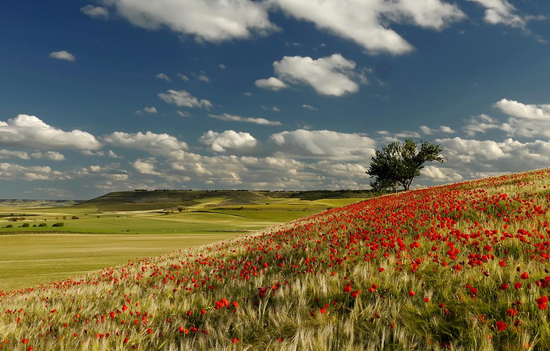 Photo wallpaper field, the sky, clouds, trees, flowers, hills, Maki, meadow