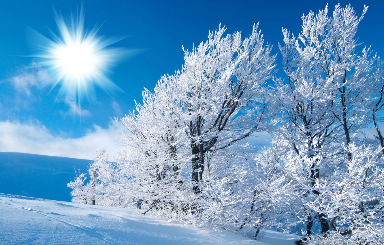 Photo wallpaper winter, frost, field, the sky, the sun, light, snow, trees, traces, frost