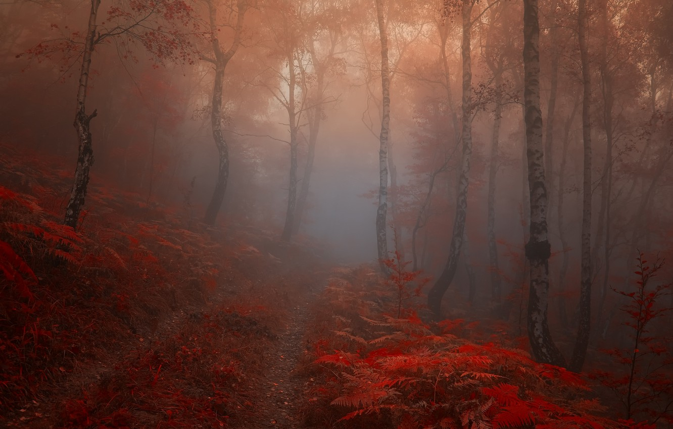 Photo wallpaper road, autumn, forest, leaves, trees, fog, Nature, trail, morning, red, birch