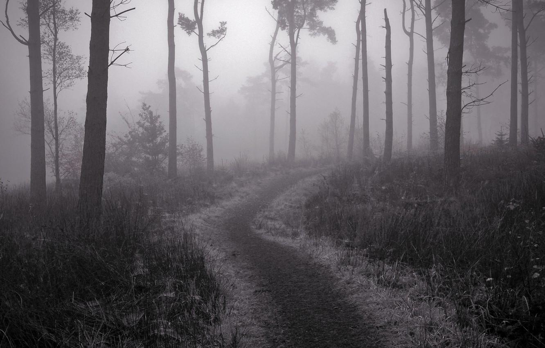 Photo wallpaper fog, trail, Forest, twilight