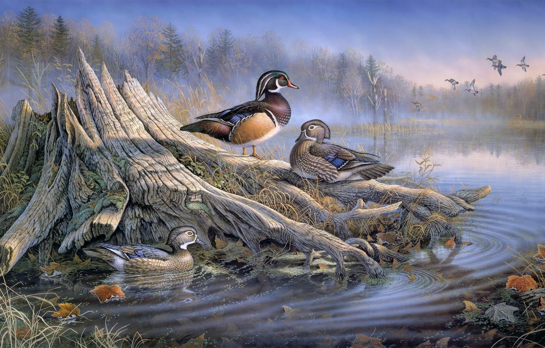 Photo wallpaper autumn, forest, water, birds, fog, lake, stump, duck, painting, art, Sam Timm, autumn leaves, animal …