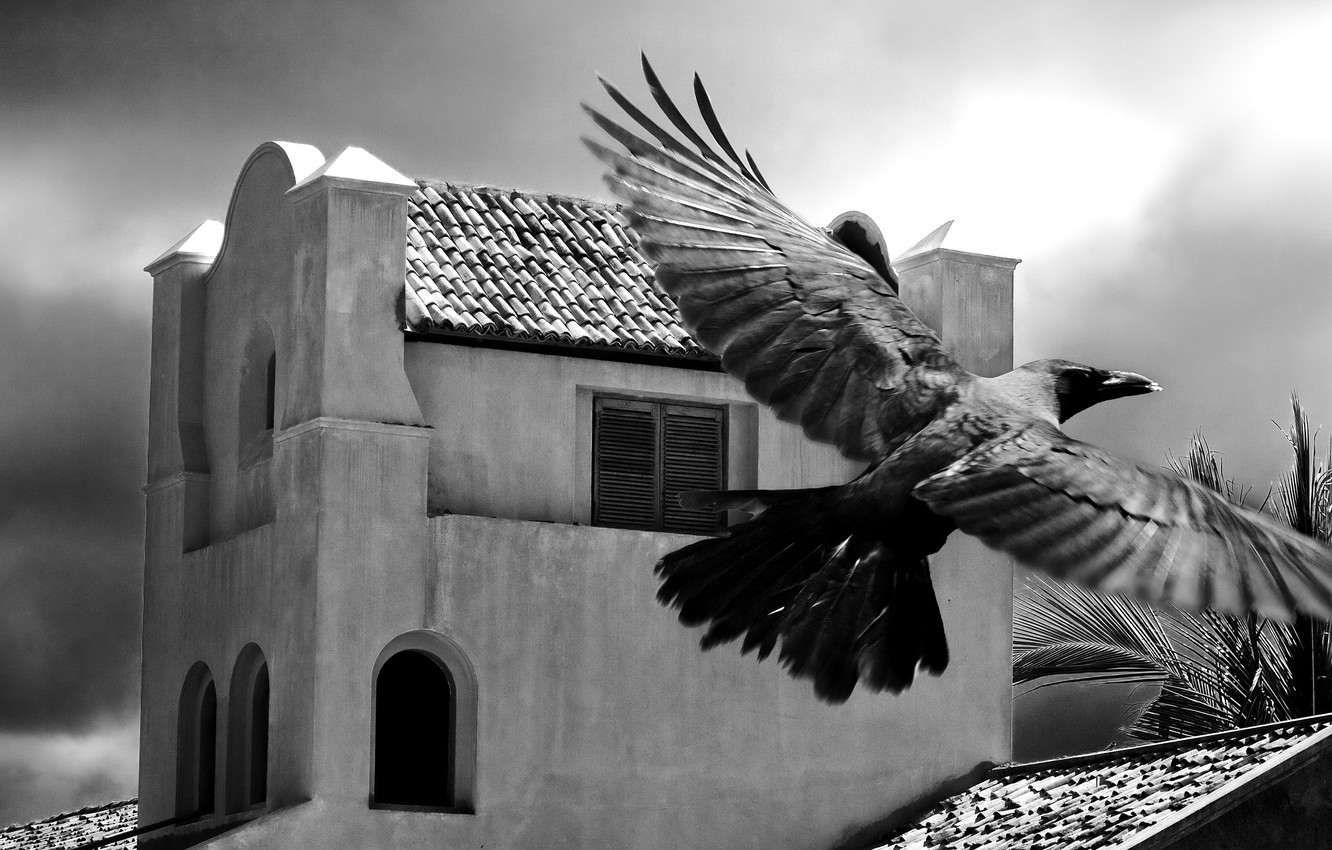 Photo wallpaper Palma, bird, the building, black and white