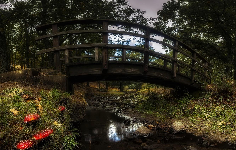 Photo wallpaper autumn, bridge, Park, mushrooms