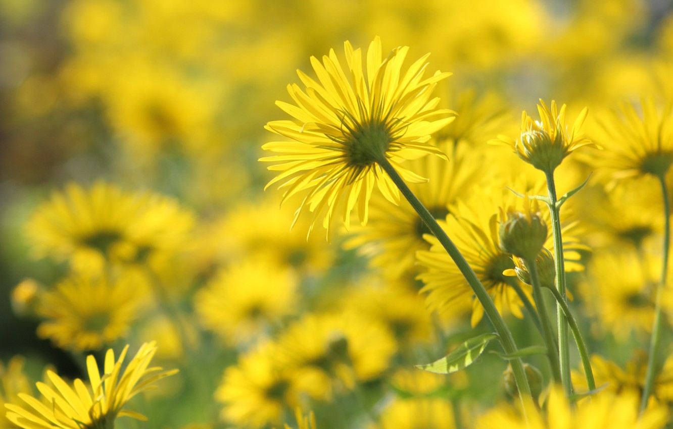 Photo wallpaper mood, spring, the flowers are yellow