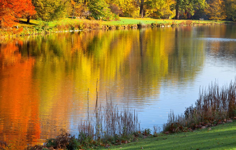 Wallpaper Trees Landscape Nature Lake Reflection Trees