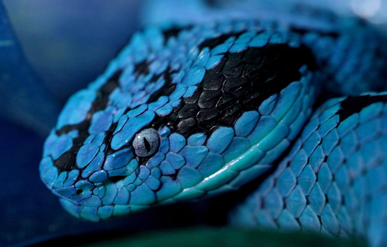 Photo wallpaper eyes, snake, head, scales