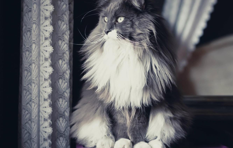 Photo wallpaper cat, cat, look, Koshak