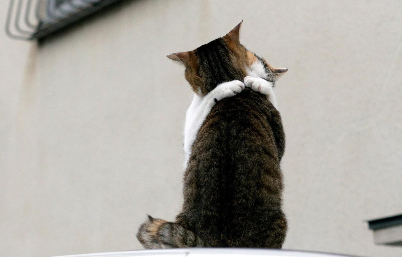 Photo wallpaper love, cats, meeting, 150