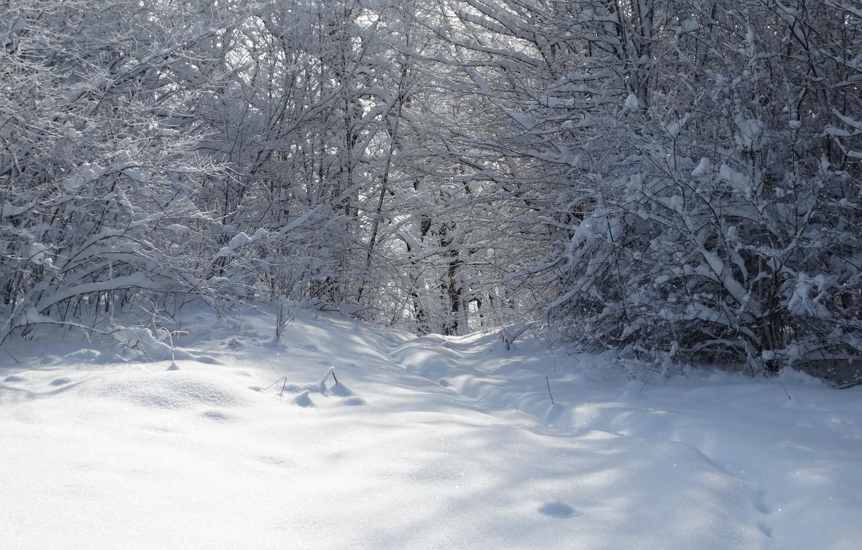 Photo wallpaper winter, forest, snow, trees, Kuban, Akela White, Lago-Naki