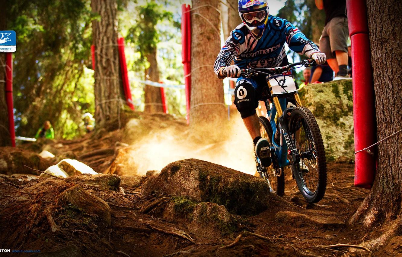 Photo wallpaper forest, speed, dust, Bike, Mountain bike, Bike