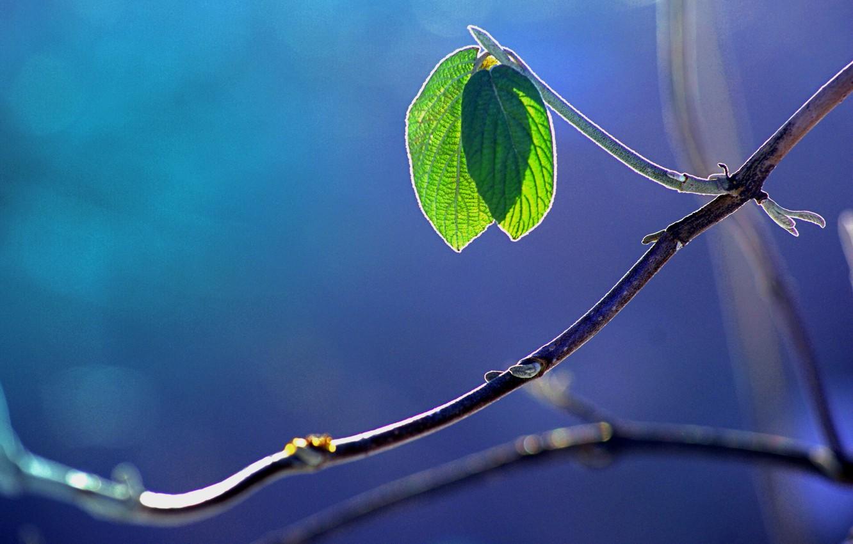 Photo wallpaper macro, glare, foliage, branch
