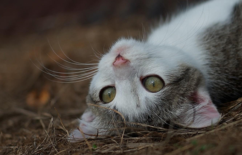 Photo wallpaper eyes, mustache, muzzle, kitty