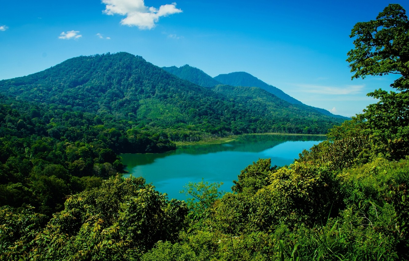 Wallpaper Forest Mountains Lake Bali Indonesia Bali