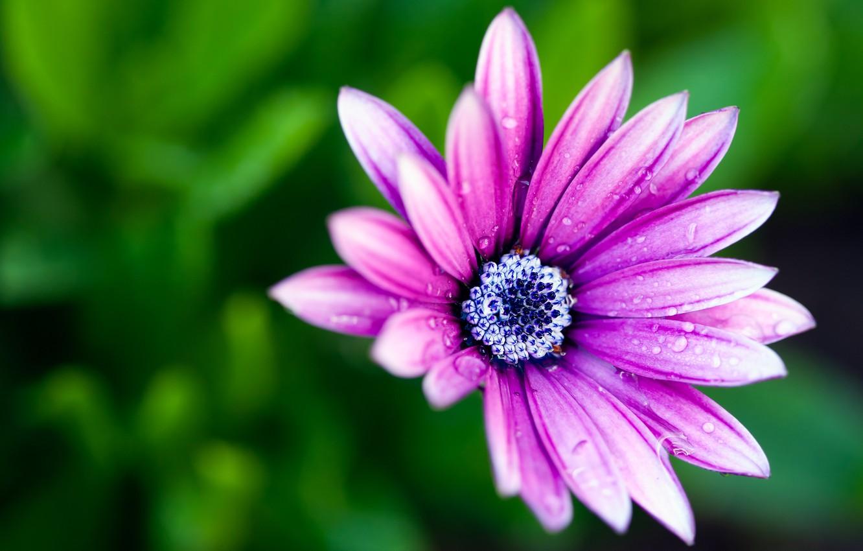 Photo wallpaper flower, macro, Rosa, paint, colors, petals, flower, macro, bokeh, bokeh, 2560x1600, dew, petals