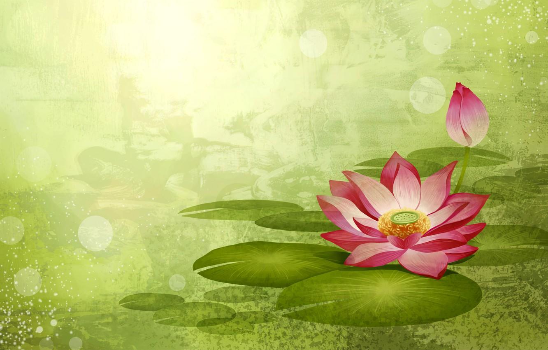 Photo wallpaper flower, paint, vector, petals, Lotus