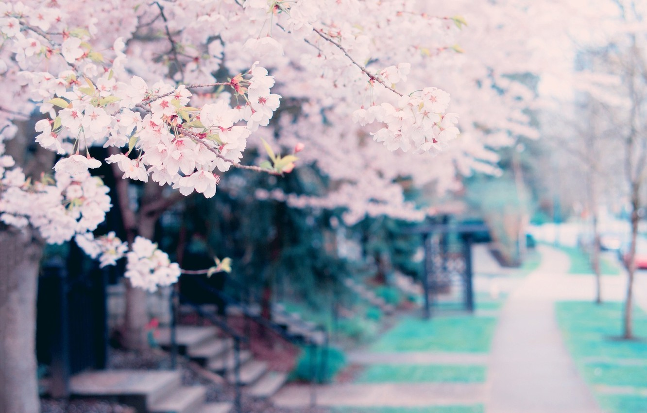 Photo wallpaper flowers, tree, spring, tree, spring, blossoms