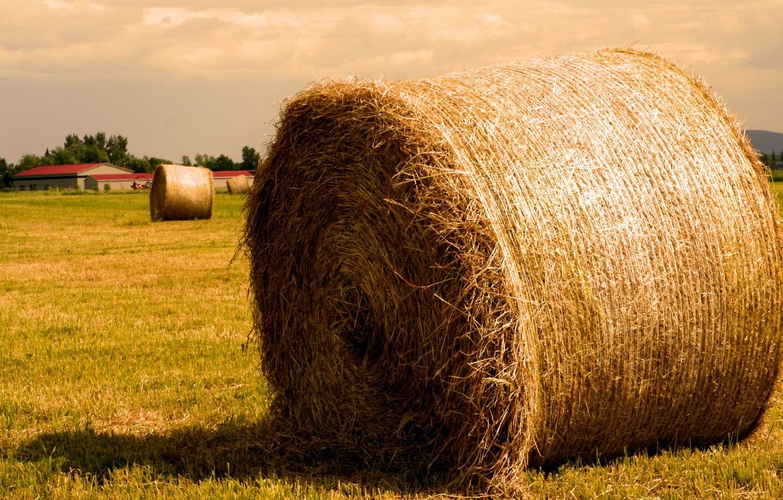 Photo wallpaper field, Straw, hay, bale