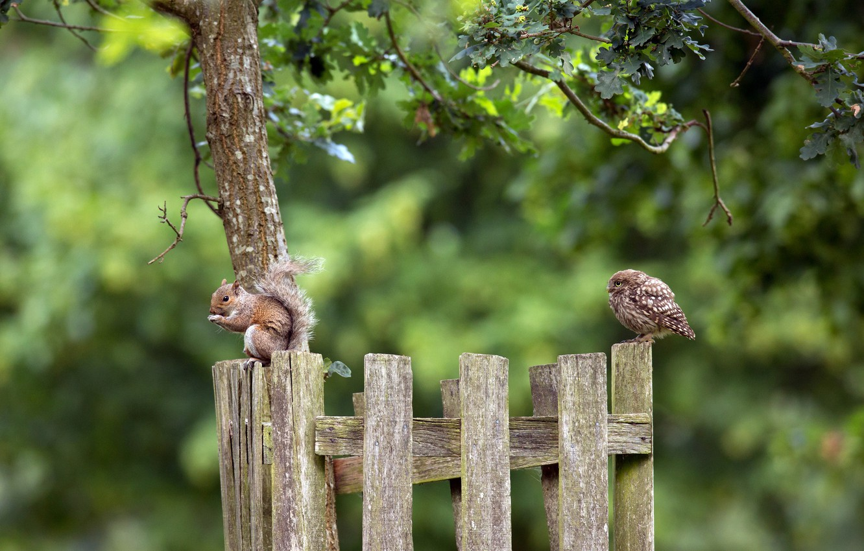 Photo wallpaper nature, owl, protein