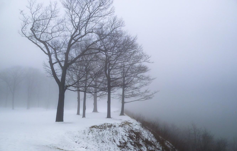 Photo wallpaper winter, snow, trees, fog