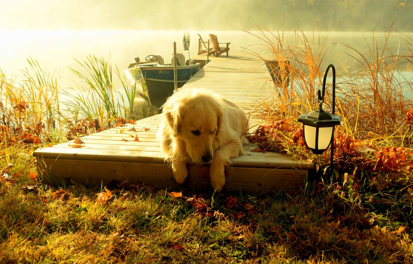Photo wallpaper forest, the sky, grass, water, landscape, sunset, nature, lake, boat, view, dog, lantern, grass, forest, …